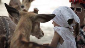 Madre con la pequeña alimentación de la hija ciervos almacen de metraje de vídeo