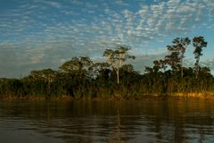 Madre de Dios river in Manu National park with scenery of tropical rain forest in the Peruvian amazonia, wallpaper. Beautiful sunrise, boat trip on river royalty free stock photography