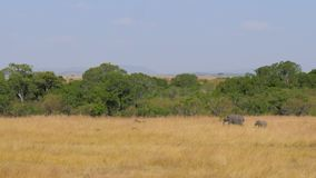 Madre del elefante africano con el bebé que camina en la sabana almacen de metraje de vídeo