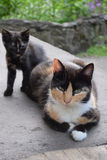 Madre del gatto con il suo gattino Immagini Stock Libere da Diritti