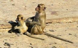 Madre del mono con el bebé Fotos de archivo