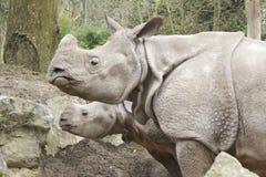 Madre del rinoceronte con el bebé Fotografía de archivo