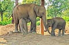 Madre dell'elefante e due bambini Fotografie Stock Libere da Diritti