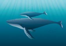 Madre della balena di Humpback con i giovani illustrazione di stock