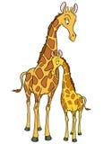 Madre della giraffa e giovane cub Fotografia Stock Libera da Diritti