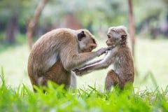 Madre della scimmia ed il suo bambino Immagine Stock Libera da Diritti