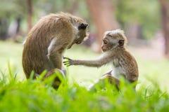 Madre della scimmia ed il suo bambino Fotografia Stock