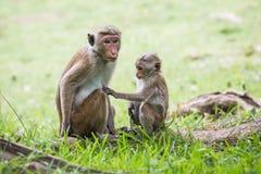 Madre della scimmia ed il suo bambino Fotografie Stock