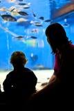 Madre e bambino in acquario Immagini Stock Libere da Diritti