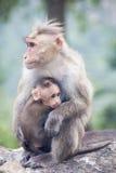 Madre e fare da baby-sitter del macaco del reso vicino ad una strada principale Immagine Stock