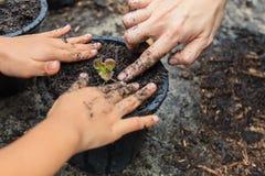 Madre e figlia che piantano le giovani piantine dell'insalata della quercia rossa Fotografia Stock Libera da Diritti