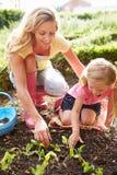 Madre e figlia che piantano le piantine su assegnazione Fotografie Stock Libere da Diritti