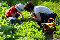 Madre e figlia in orto Immagine Stock Libera da Diritti