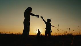 Madre e figlio che giocano con un cane al tramonto Movimento lento stock footage