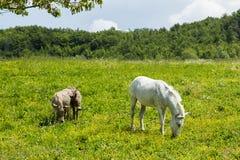 Madre e giovani: Cavallini fotografia stock libera da diritti