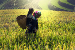 Madre e hija en campo de maíz imagenes de archivo