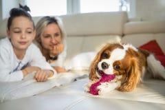 Madre e hijo que tienen un buen rato con el perro en el sofá en la mañana El rey arrogante Charles Spaniel que juega en casa imagenes de archivo
