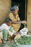 Madre etiopica di vita del villaggio ed erbe pulite del figlio Fotografia Stock Libera da Diritti