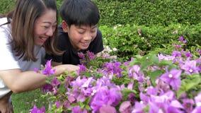 Madre felice e figlio asiatici della famiglia che esaminano fiore rosa Registrato tenuto in mano al rallentatore a 4K a 60fps archivi video