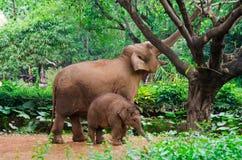 Madre grande dell'elefante e piccolo bambino Fotografia Stock Libera da Diritti