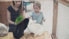 Madre hermosa joven con poca hija que mira conejos en la jaula, alimentándolos almacen de video