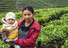 Madre joven con el niño en la plantación de té Imagen de archivo