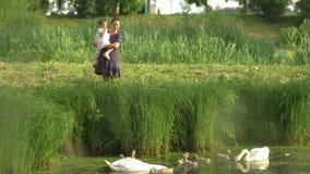 Madre joven con su cisne de alimentación de la hija del bebé y pequeños anadones en una charca verde del parque que lleva el vest almacen de video