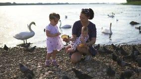 Madre joven con sus hijas del bebé que alimentan el cisne y los pequeños anadones pájaros pan en un río que lleva el vestido punt metrajes