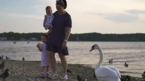 Madre joven con sus hijas del bebé que alimentan el cisne y los pequeños anadones pájaros pan en un río que lleva el vestido punt almacen de metraje de vídeo