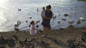Madre joven con sus hijas del bebé que alimentan el cisne y los pequeños anadones pájaros pan en un río que lleva el vestido punt almacen de video