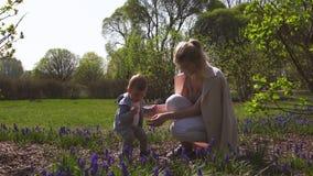 Madre joven que juega y que habla con un hijo del bebé en un campo del muscari en la primavera - día soleado - jacinto de uva - R almacen de metraje de vídeo