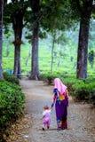 Madre musulmán con su hija en la granja del té fotografía de archivo libre de regalías