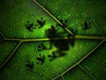 Madre natura Fotografie Stock Libere da Diritti