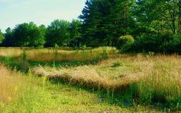 Madre natura che riprende un campo da golf Fotografia Stock Libera da Diritti