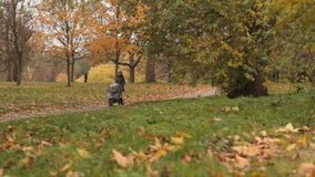 Madre que camina con el carrito en bosque almacen de video