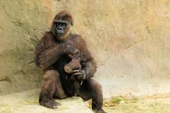 Madre que cuida para el bebé Imagen de archivo libre de regalías