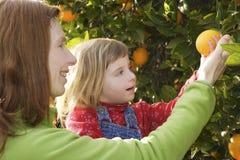 Madre que muestra a hija la cosecha del árbol anaranjado Imagenes de archivo