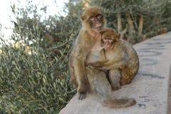 Madre y bebé del mono Imagenes de archivo