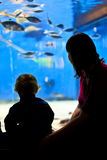 Madre y bebé en acuario Imágenes de archivo libres de regalías