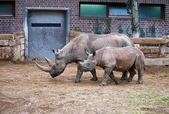 Madre y niño del rinoceronte Imágenes de archivo libres de regalías