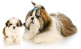 Madre y perrito Foto de archivo libre de regalías