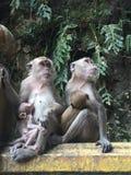 Madres del mono Imágenes de archivo libres de regalías