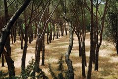 Madrid park. By the Zoo, very dry grass and green trees stock photography