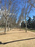 Madrid Rio Tree Lines Stock Foto