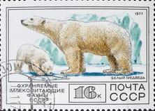 Vintage stamp shows white bear / polar bear Ursus maritimus. MADRID, SPAIN - APRIL 6, 2019. Vintage stamp printed in soviet union shows white bear / polar bear stock images