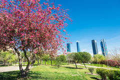 Madrid in spring Royalty Free Stock Images