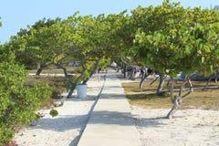 Madrisky träd Arkivfoton