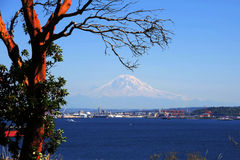Madrona and Rainier Royalty Free Stock Photo