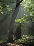 Madrugada brumosa Foto de archivo libre de regalías