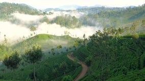 Madrugada brumosa, trabajador del estado del té, montañas centrales